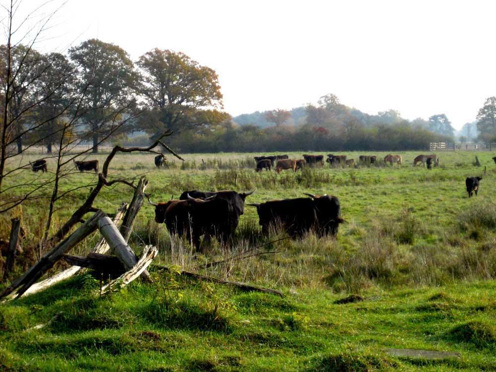 Dreh im Naturschutzgebiet Hutweide